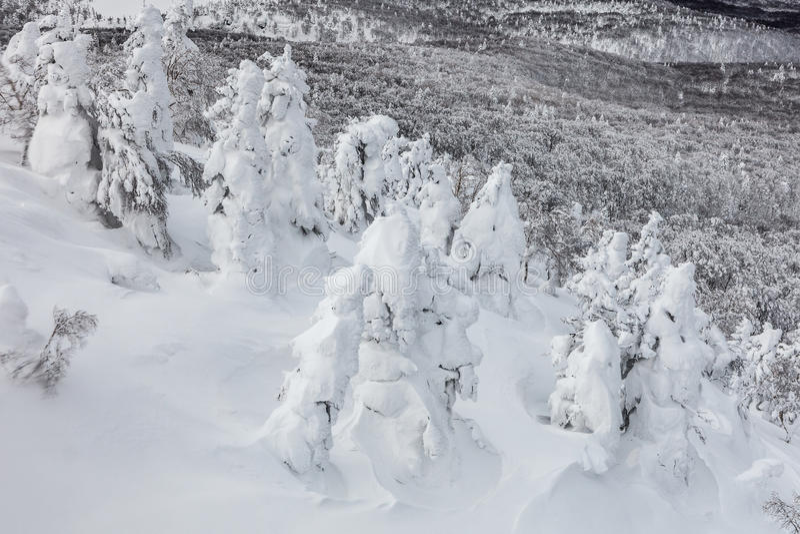 Śnieżny potwór lub śnieg frosted drzewa przy górą Hakkoda obraz royalty free