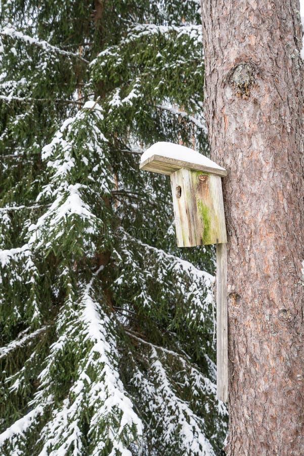 Śnieżny ptaka dom na sośnie Drewniana woliera szalunek Gniazdowy pudełko w lasowym, naturalnym zimy tła wzorze, obraz stock