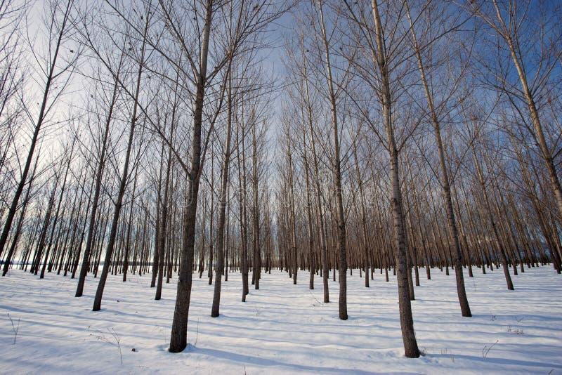 Śnieżny sad na jaskrawym dniu. obrazy stock