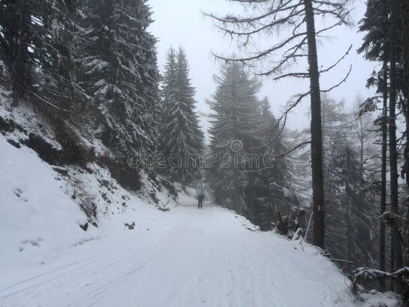 Śnieżny Sinaia obrazy stock