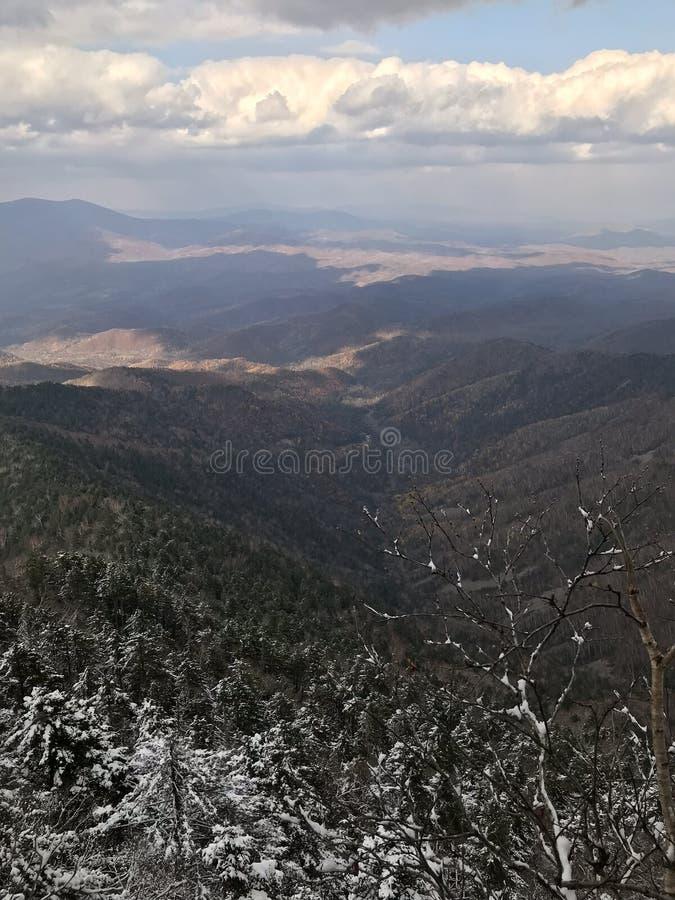 Śnieżny sosnowy las halny Falaza obrazy royalty free