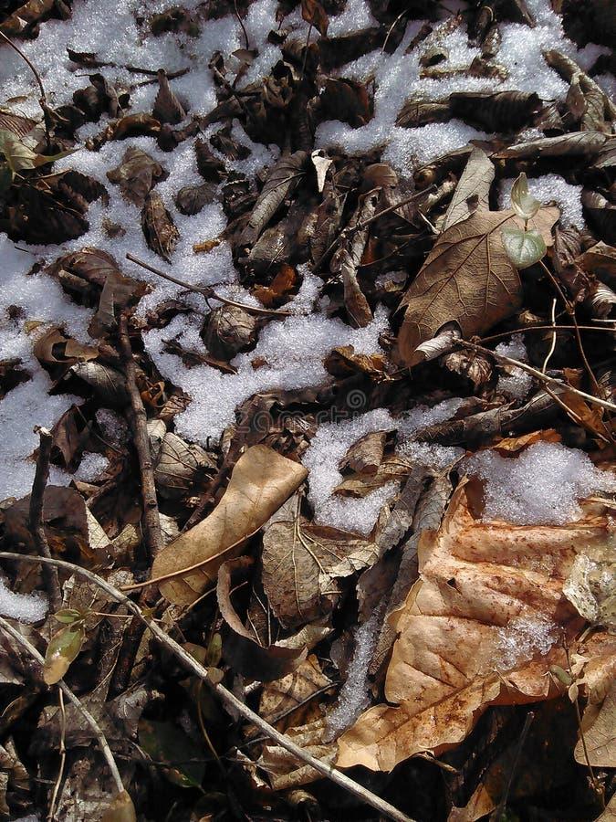 Śnieżny tło zdjęcie royalty free