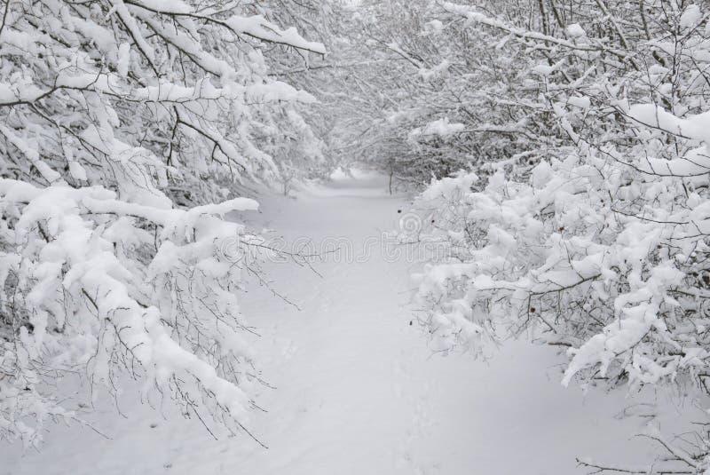 Śnieżny tunel obrazy royalty free
