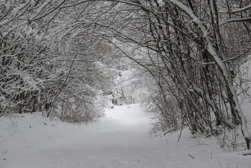 Śnieżny tunel obraz stock
