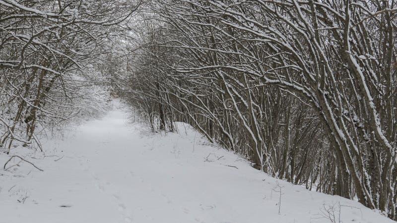 Śnieżny tunel zdjęcia stock