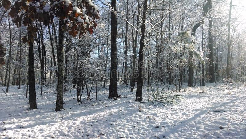 Śnieżny wschód słońca zdjęcia stock