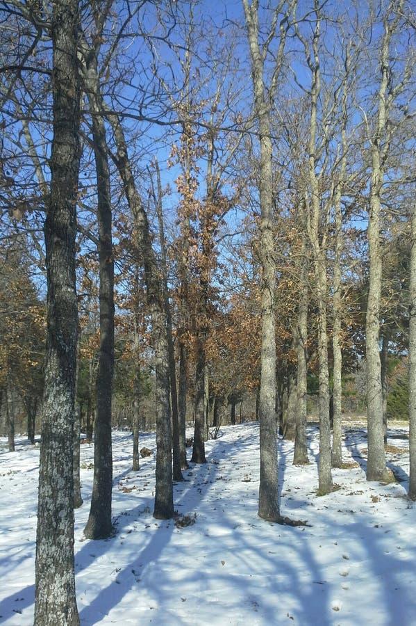 Śnieżny zima dzień fotografia royalty free