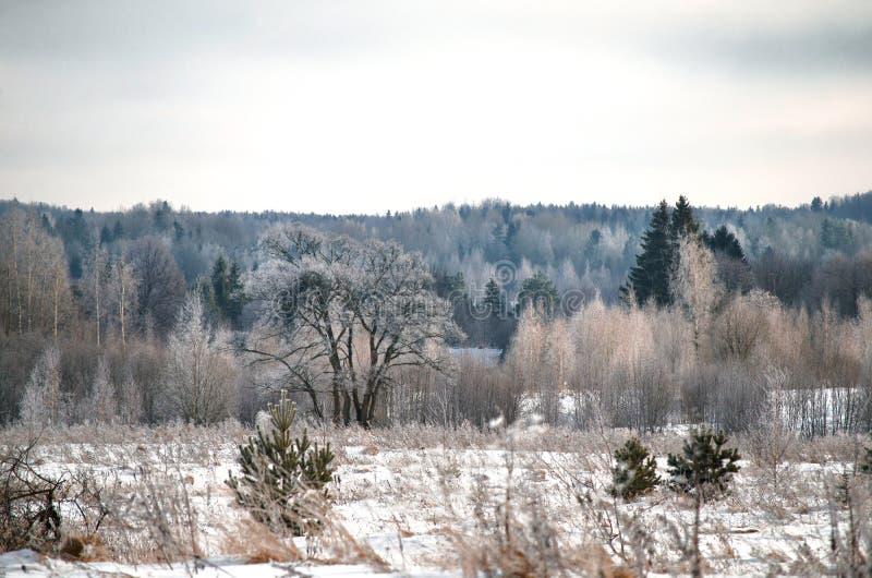 Śnieżny zima krajobraz w górkowatym pustkowiu fotografia royalty free