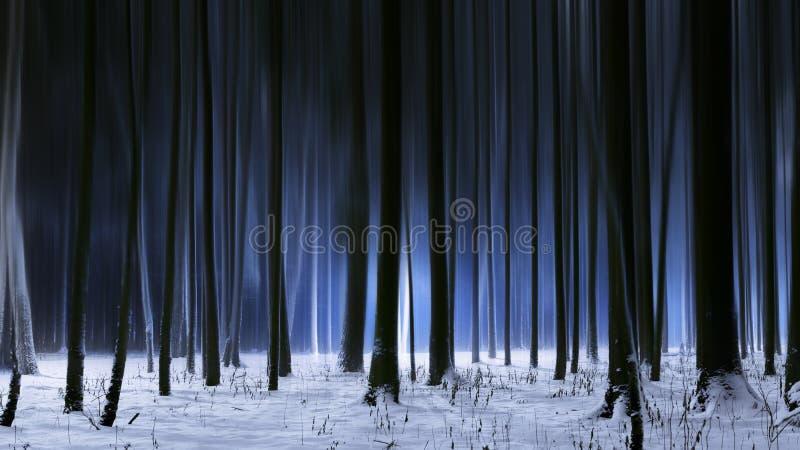 Śnieżny zima las w ciemnej nocy zdjęcia stock