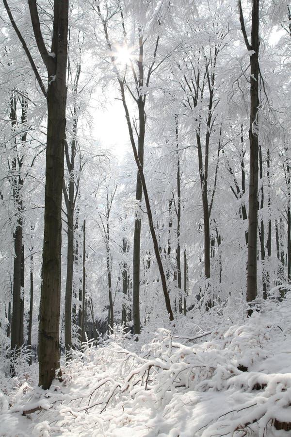 Śnieżny zima las zaświecał ranku słońcem zdjęcia stock