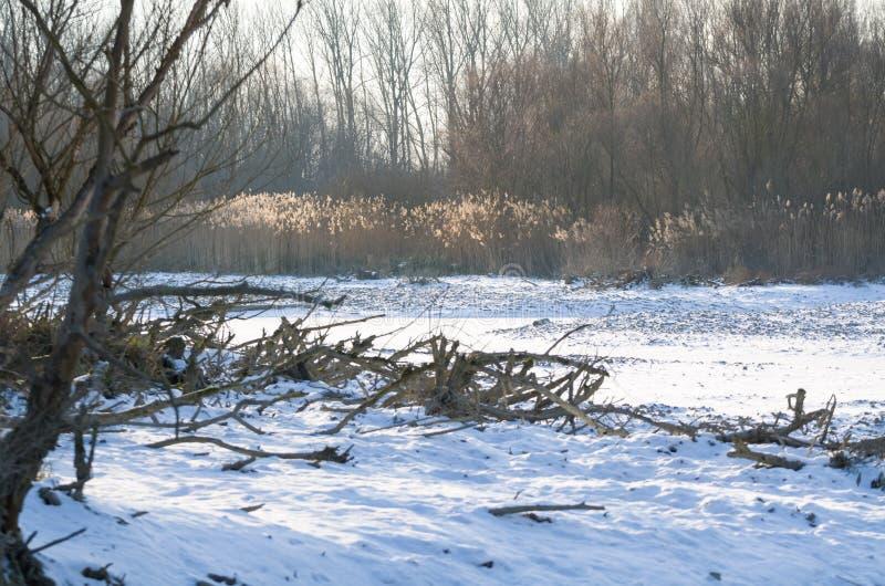 Śnieżny zimy Danube stojącej wody krajobraz fotografia royalty free
