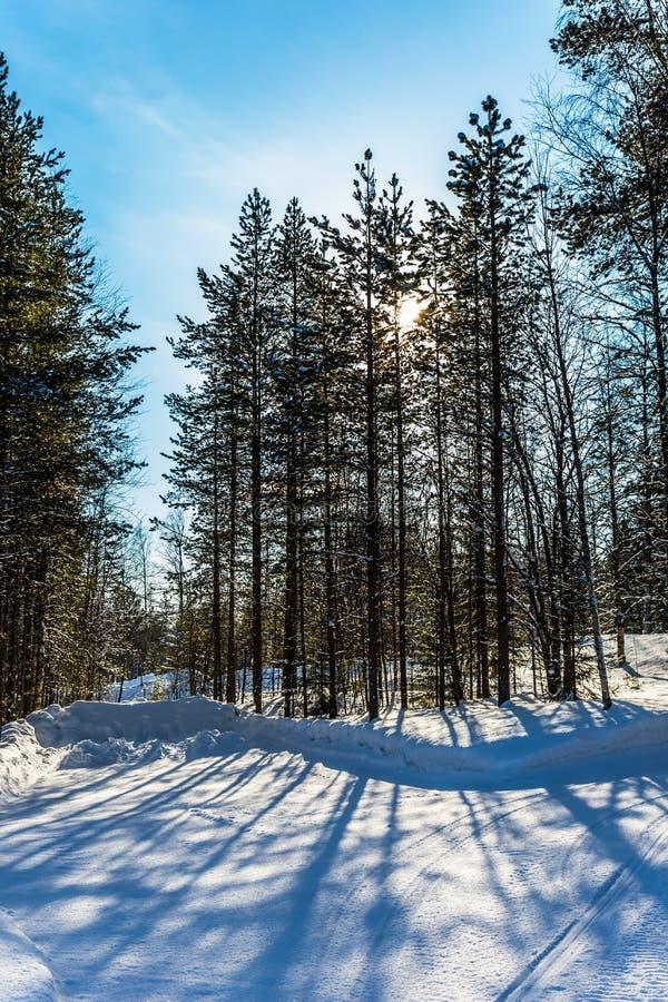 Śnieżny zmierzch w Lapland zdjęcie royalty free
