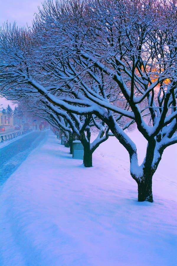 Śnieżyści drzewa w zimie blisko chodniczka i drogi w mieście zdjęcia royalty free