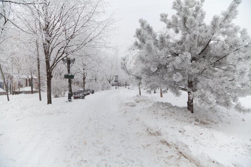 Śnieżyści zim drzewa na miasto bulwarze zdjęcia stock