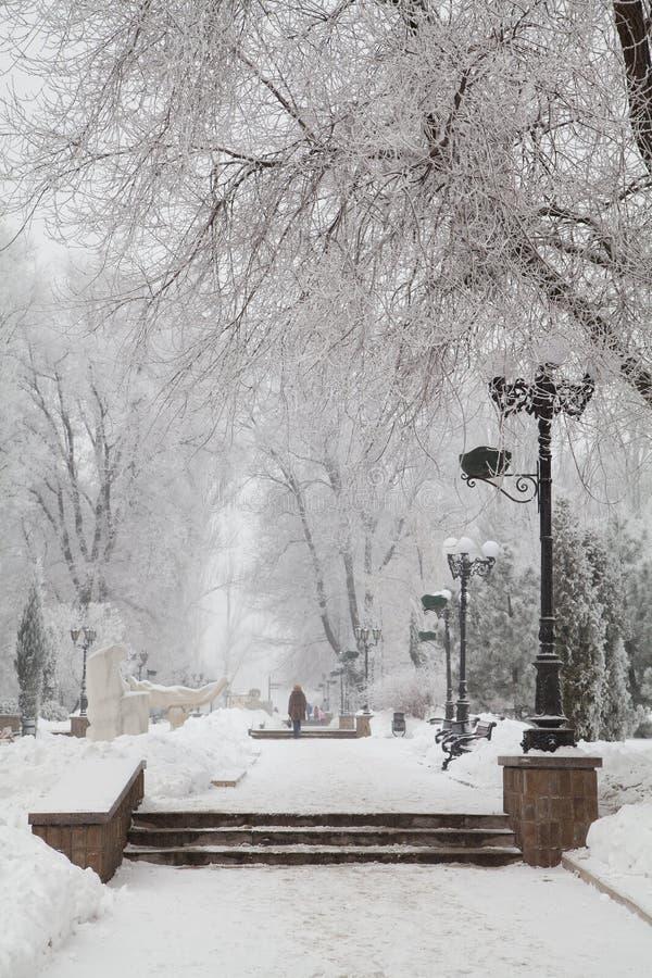 Śnieżyści zim drzewa na miasto bulwarze fotografia royalty free