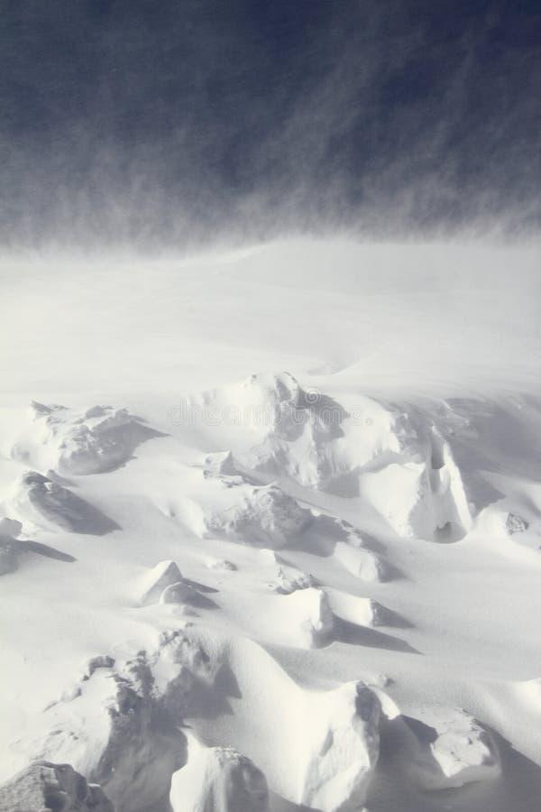 śnieżyca obraz royalty free