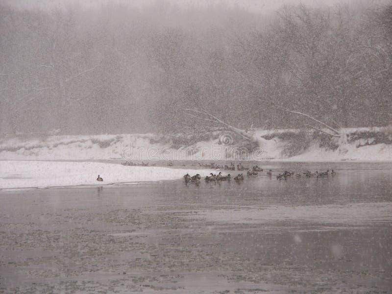 Śnieżyca wzdłuż Kishwaukee zdjęcia stock