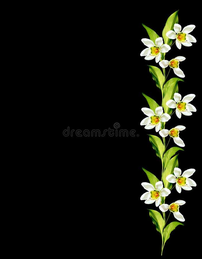Śnieżyczka kwiat odizolowywający na czarnym tle obrazy royalty free