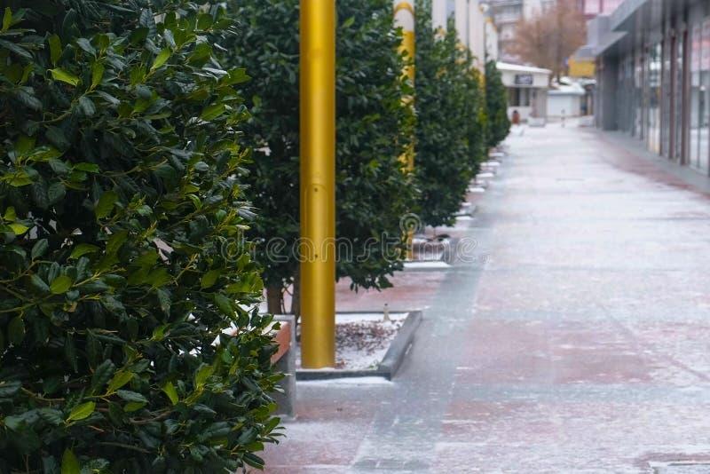 Śnieżysta piękna aleja z zielonymi drzewami i sklepami w mieście fotografia stock