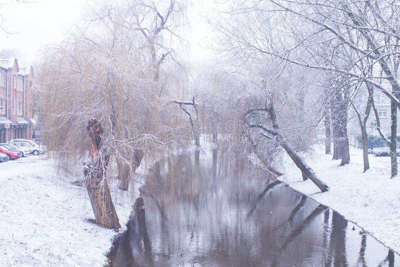 Śnieżysta rzeka drzewo wierzba w śniegu obraz royalty free