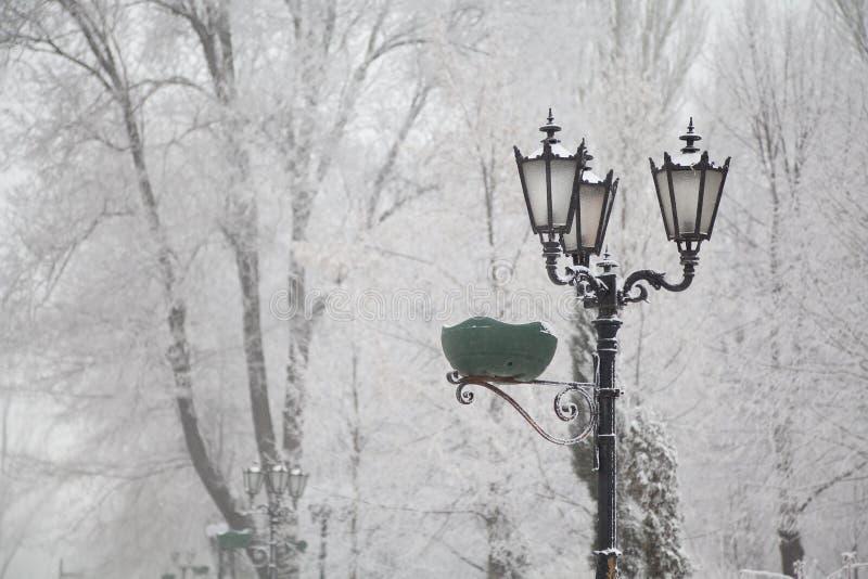 Śnieżyste latarnie uliczne i drzewa na miasto bulwarze obraz royalty free