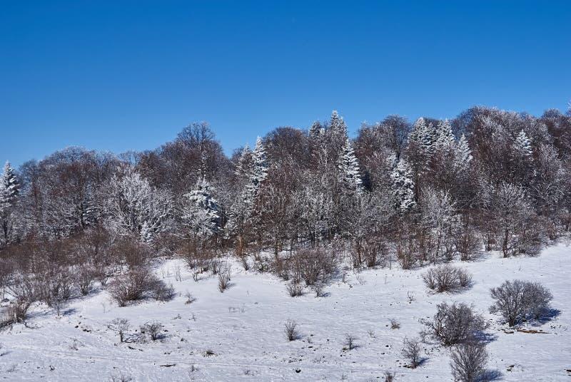 Śnieżysty las w przedpolu, śnieżna łąka przeciw tłu, - niebieskie niebo Lago-Naki Główna Kaukaska grań, R obrazy royalty free