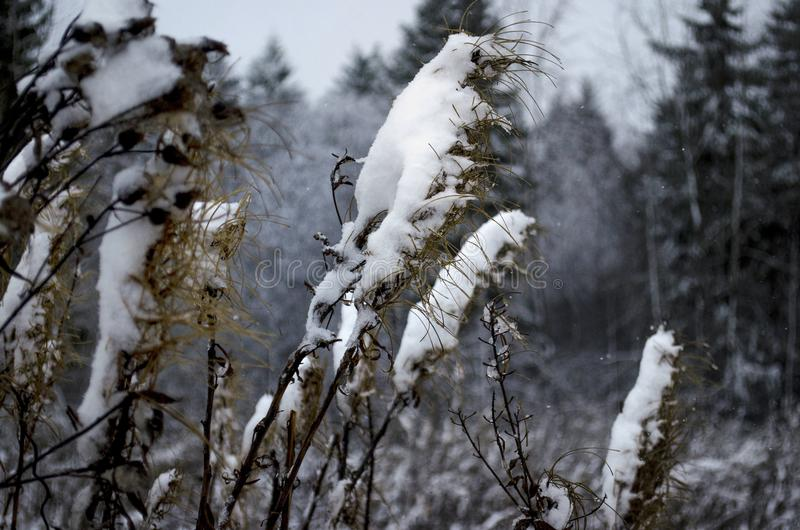Śnieżysty pole zdjęcie royalty free