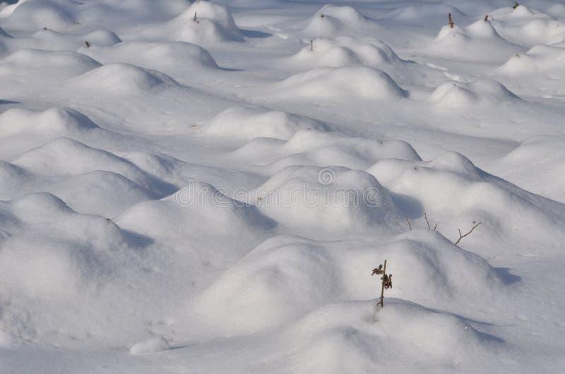 Śniegów garbki fotografia stock