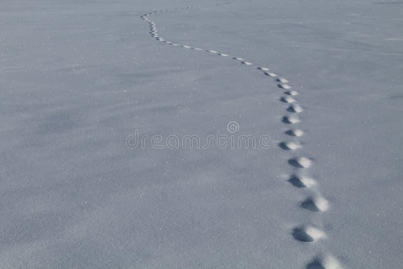 Śniegów wzory na ziemi zdjęcie stock