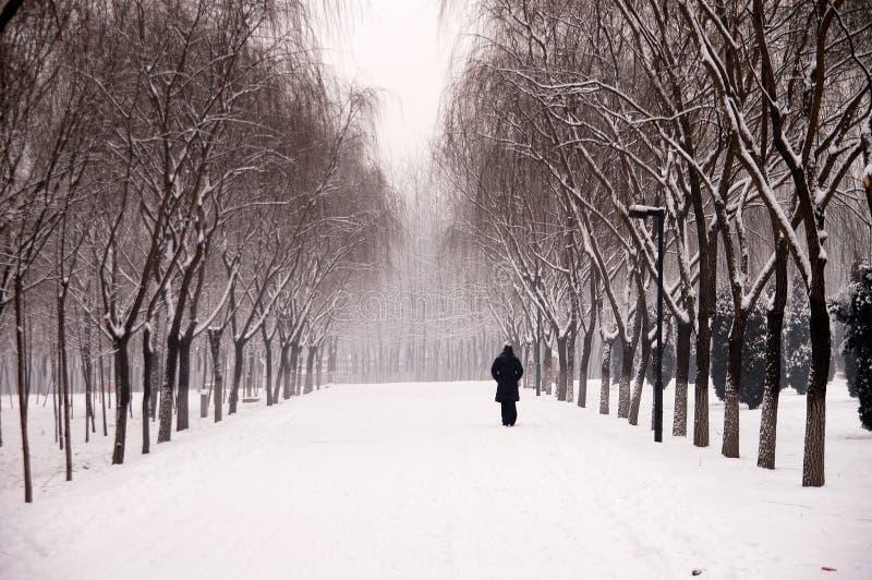 śnieg zdjęcia stock