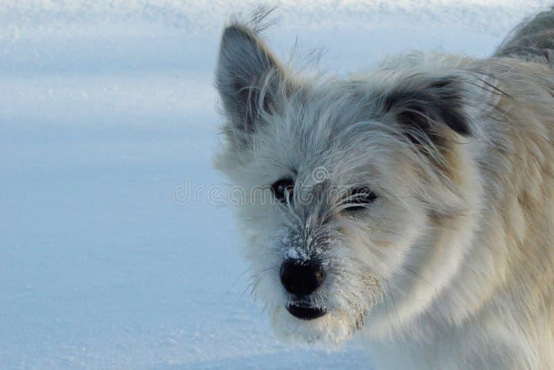 śnieg Całuje Fotografia Stock