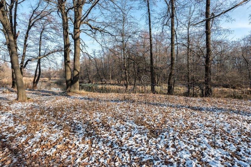 Śnieg chował starych liście w łące obrazy stock