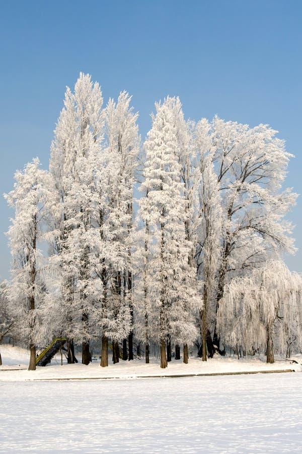 śnieg ciepły zdjęcia royalty free