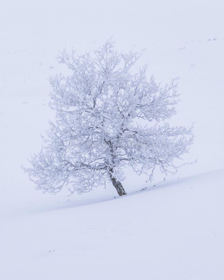 Śnieg i mróz zakrywaliśmy drzewa w białym krajobrazie w Beitostøle fotografia royalty free