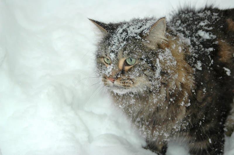 śnieg kota zdjęcia royalty free