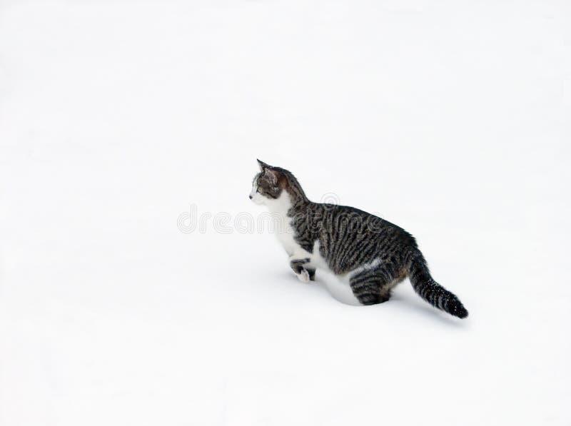 śnieg kota zdjęcia stock