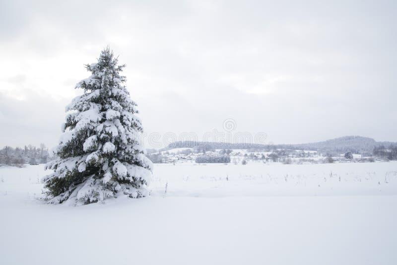 Śnieg krajobrazowa zima obrazy royalty free