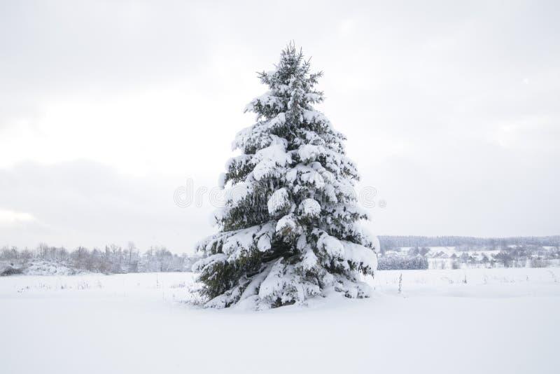 Śnieg krajobrazowa zima zdjęcia royalty free