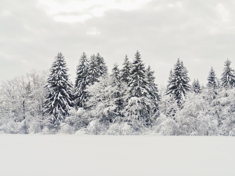 Śnieg krajobrazowa zima obraz royalty free