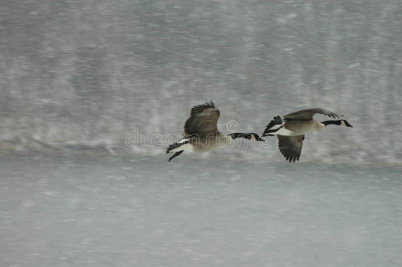 śnieg lotu obraz stock