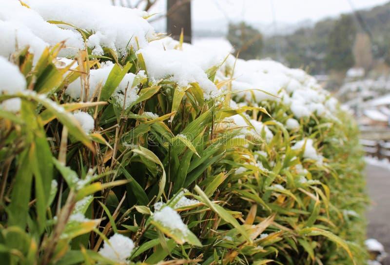 Śnieg na bambusa ogrodzeniu obraz stock