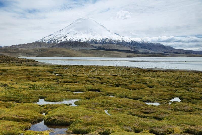 Śnieg nakrywać wysokie góry odbijać w Jeziornym Chungara zdjęcie stock