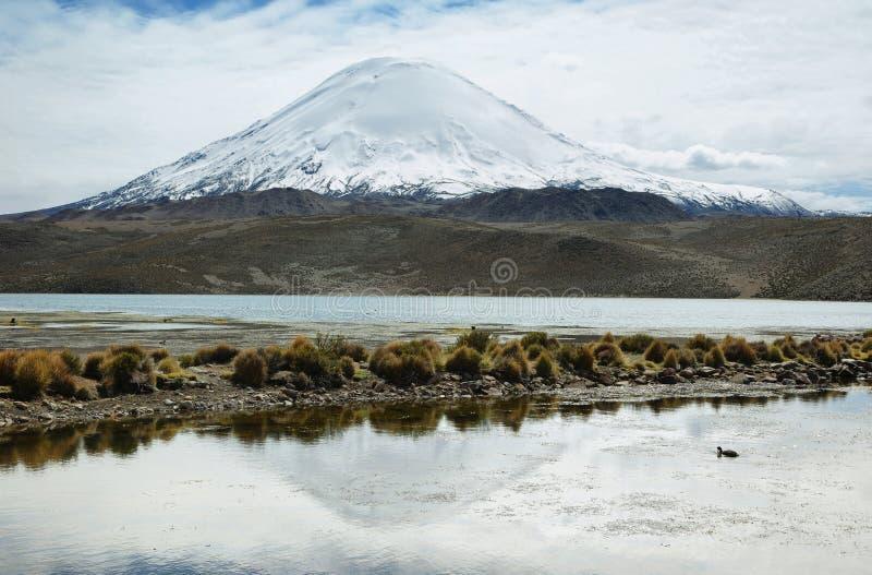 Śnieg nakrywać wysokie góry odbijać w Jeziornym Chungara zdjęcia stock