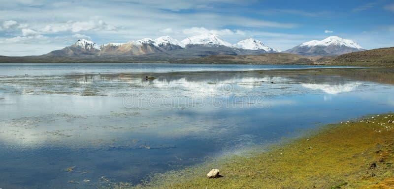 Śnieg nakrywać wysokie góry odbijać w Jeziornym Chungara fotografia stock