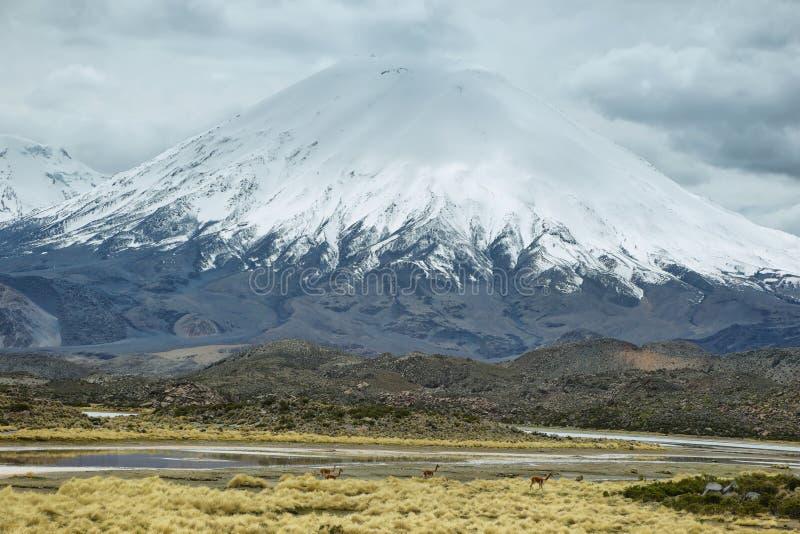 Śnieg nakrywający Parinacota wulkan obrazy royalty free