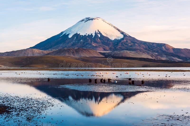 Śnieg nakrywający Parinacota wulkan, Chile fotografia stock