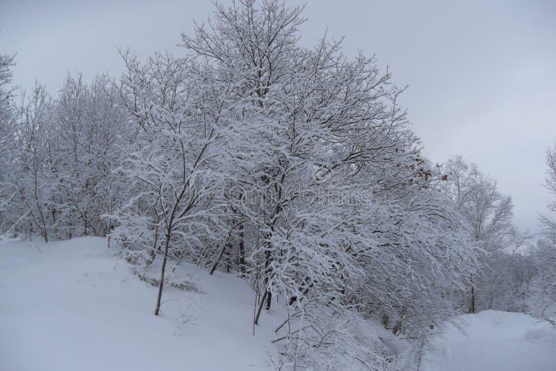 Śnieg Przylega drzewa zdjęcia stock