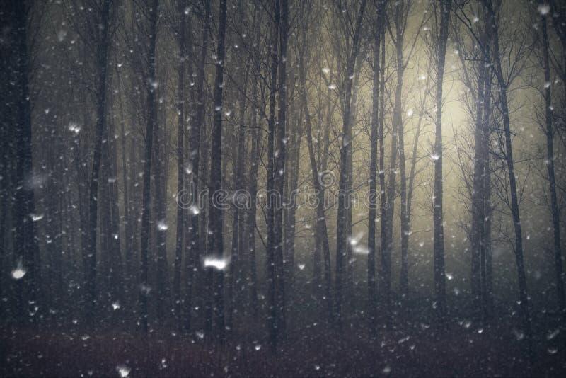 Śnieg spada w tajemniczym dzikim lesie obraz stock