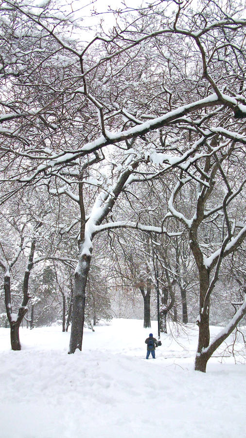 Śnieg w central park Nowy Jork obrazy royalty free