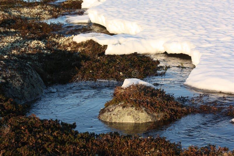 Śnieg w wiośnie tundra fotografia royalty free